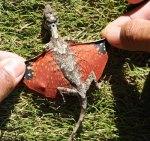 flying-tiny-dragon-lizard-avatar-photo001